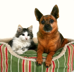 a_dog_and_a_kitten_in_a_pet_bed